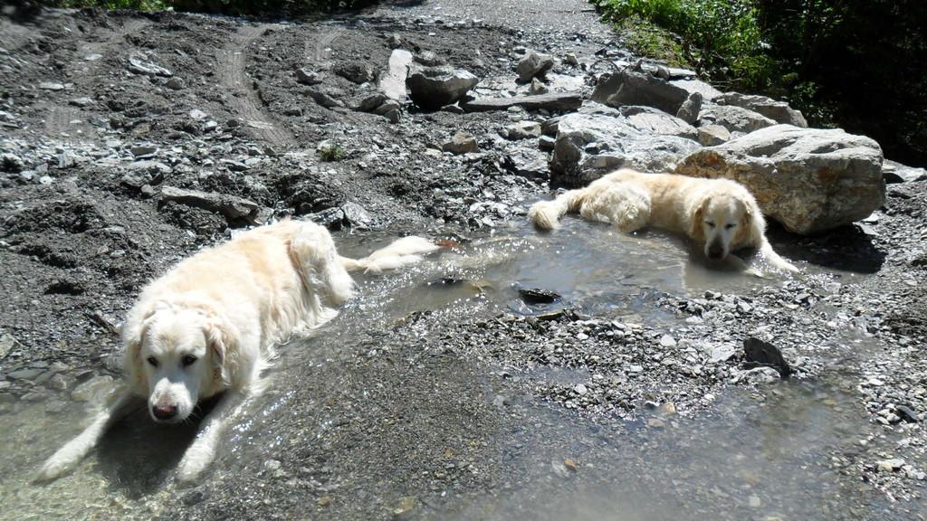 Abkühlung im Wasser, auch wenn es nicht so viel davon hat
