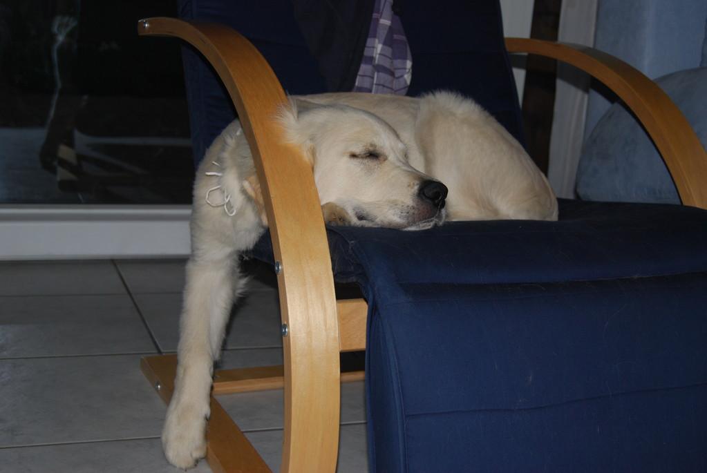 den 1. August hat er grösstenteils verschlafen