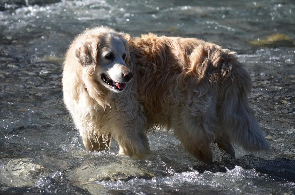 Schwemmholz fangen ist für Sina schwierig geworden, der Bach ist zu schnell