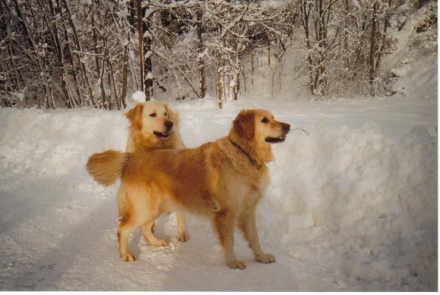 Sina und Haro im Januar 2003, Schnee ist das Beste