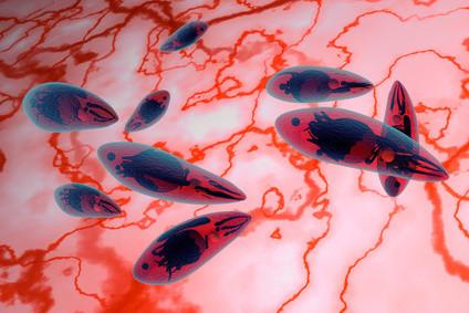 Das Mittel gegen die Würmer für das Kind 5 Jahre