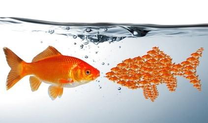 Werbung hinterfragen und optimieren. Wir zeigen Ihnen, wie Sie Ihre Werbung optimieren bzw. effizienter gestalten können