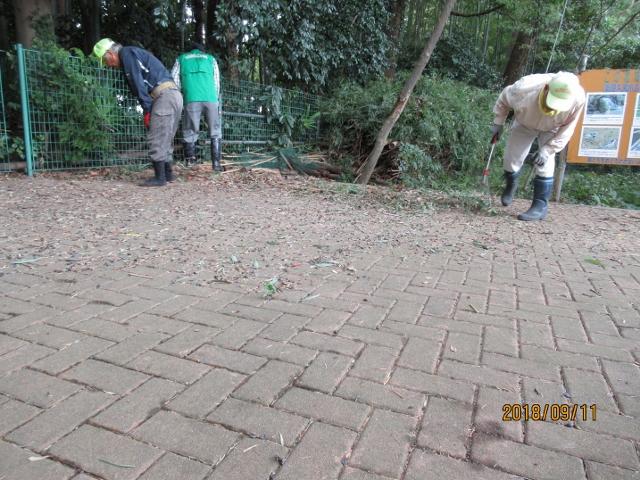 野鳥観察場所の清掃