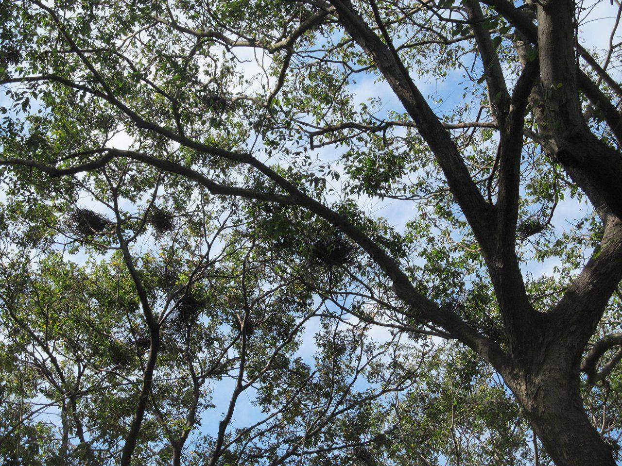 サギやまの営巣地_巣の残骸