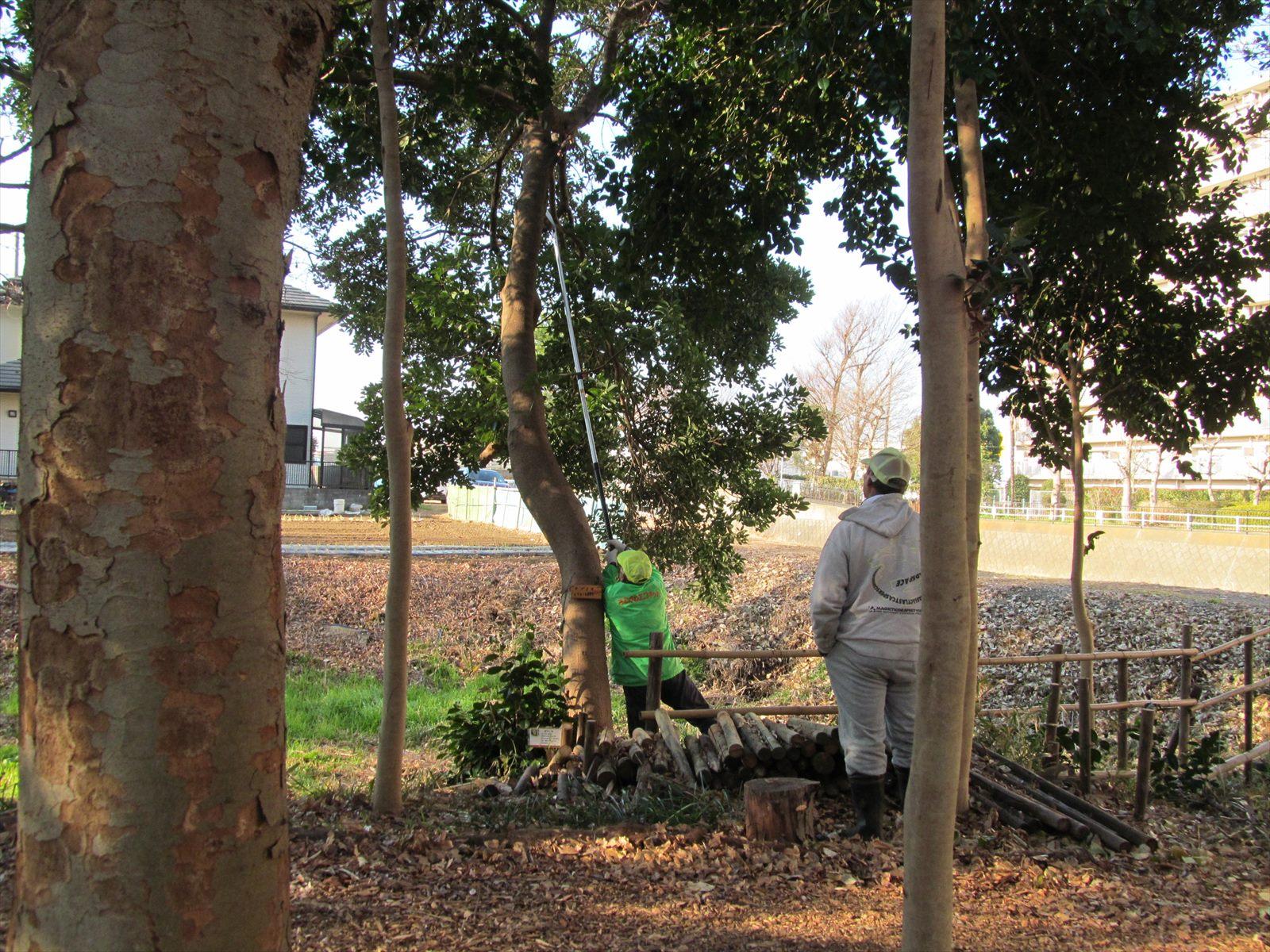 高枝の伐採
