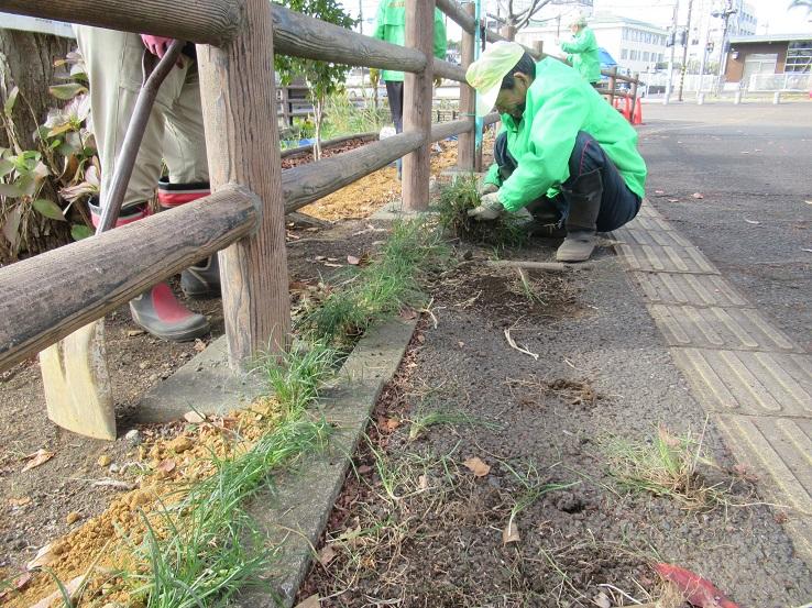 土留めのリュウノヒゲ植栽