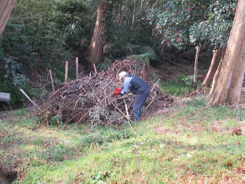 作業中 枯れた竹の保存