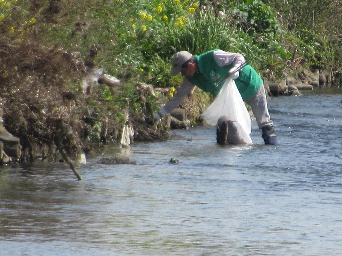 川に入ってゴミ拾い