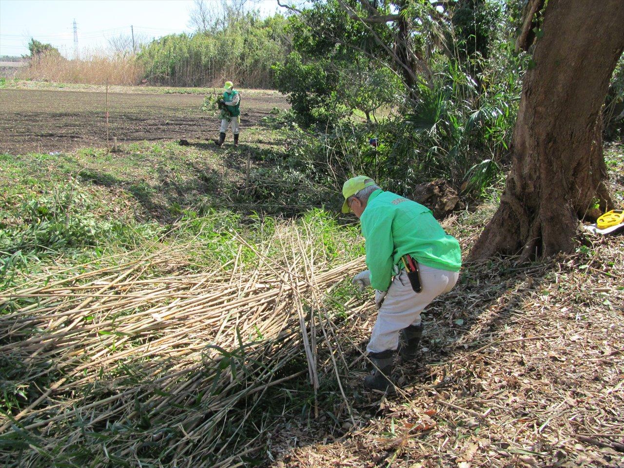 伐採後の竹の処理