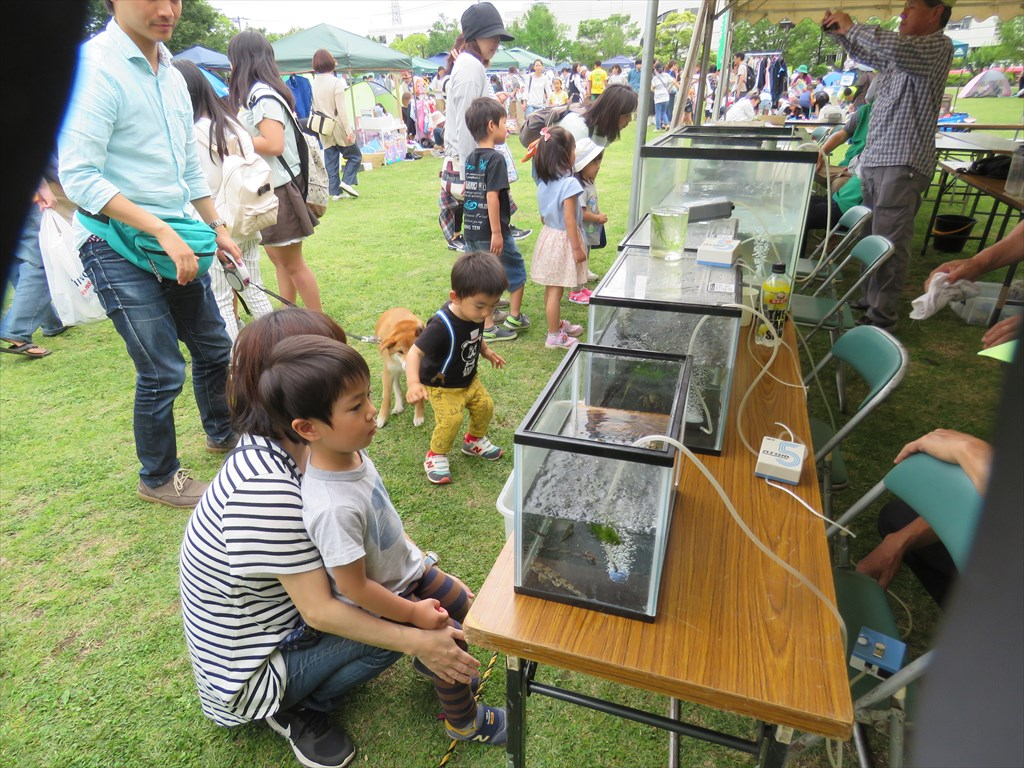 相模川、目久尻川の魚展示:一所懸命に見つめる子供がいました