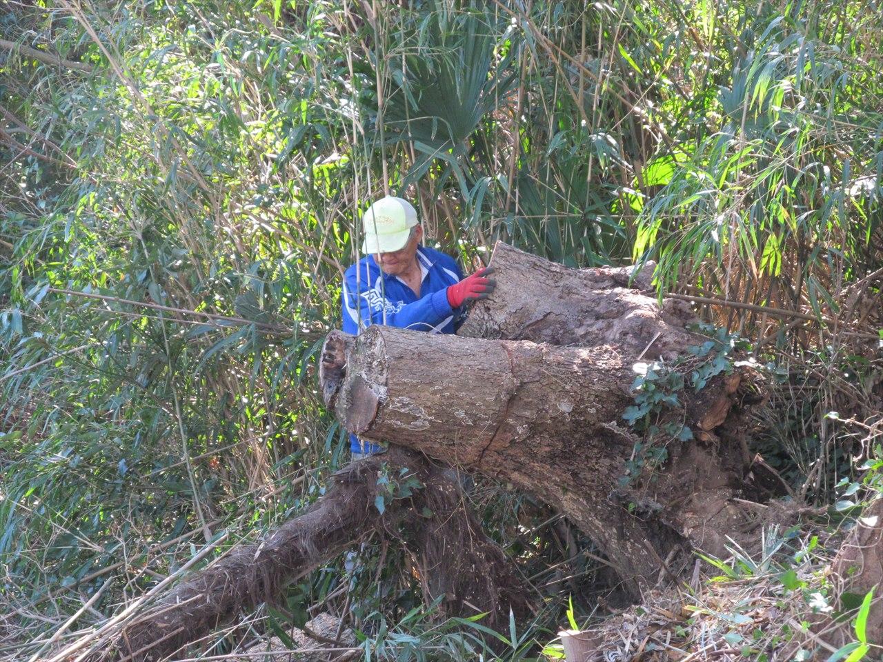 倒木の処理