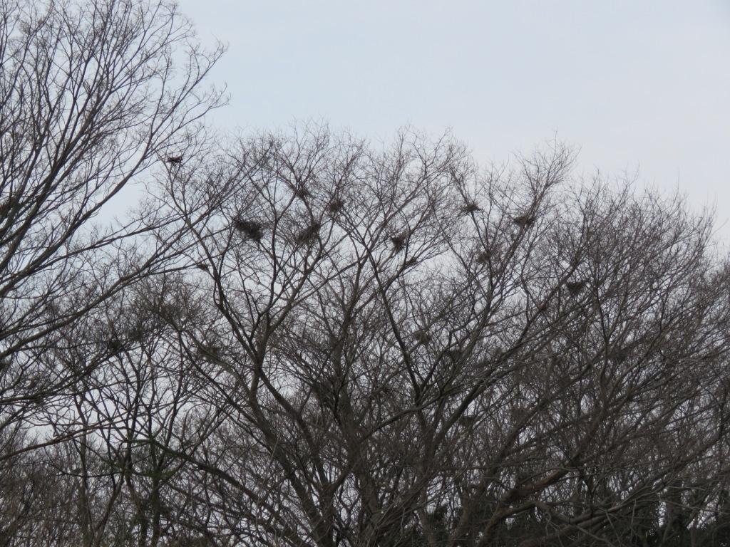 サギやまのサギの巣