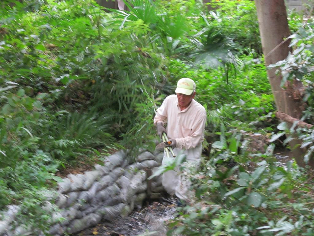 伐採した竹の運搬