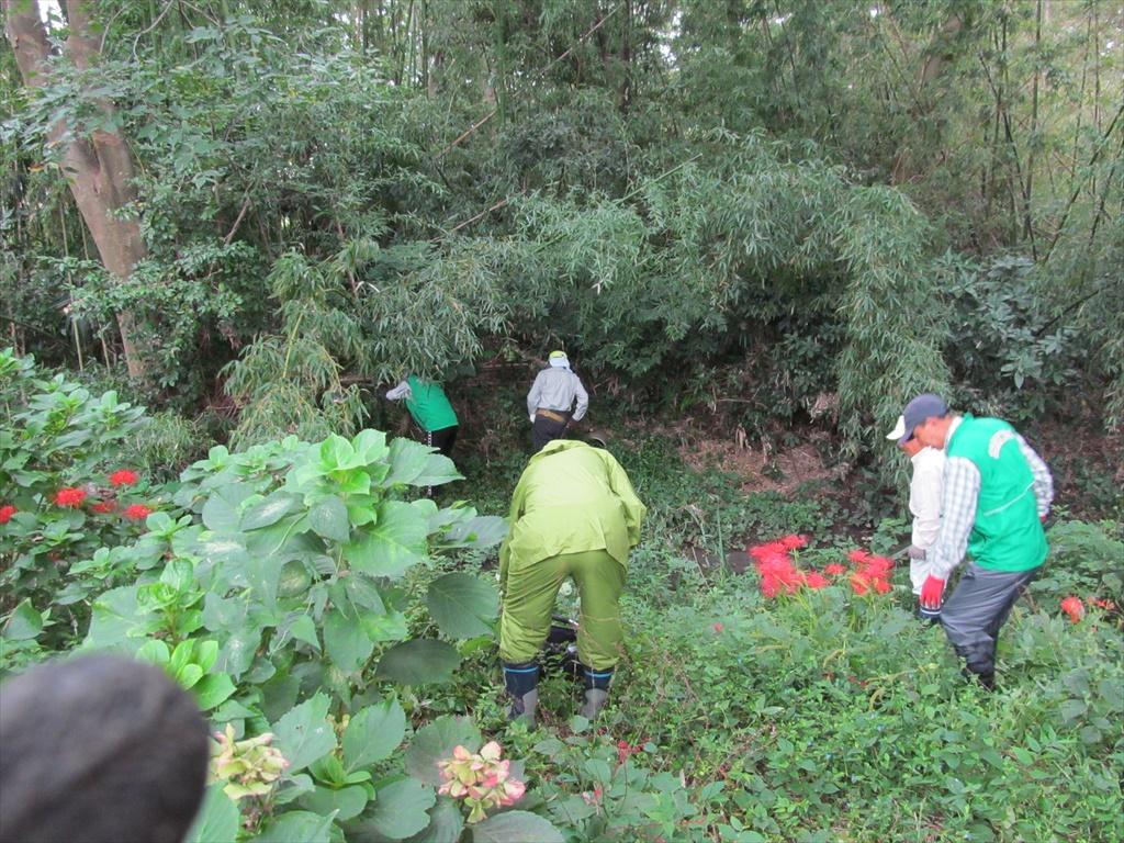 竹の伐採開始