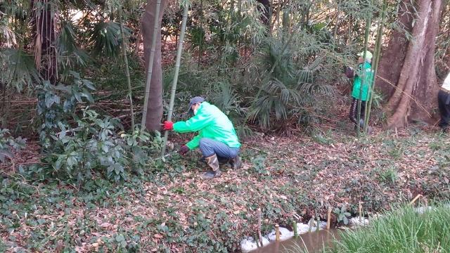 竹の伐採2