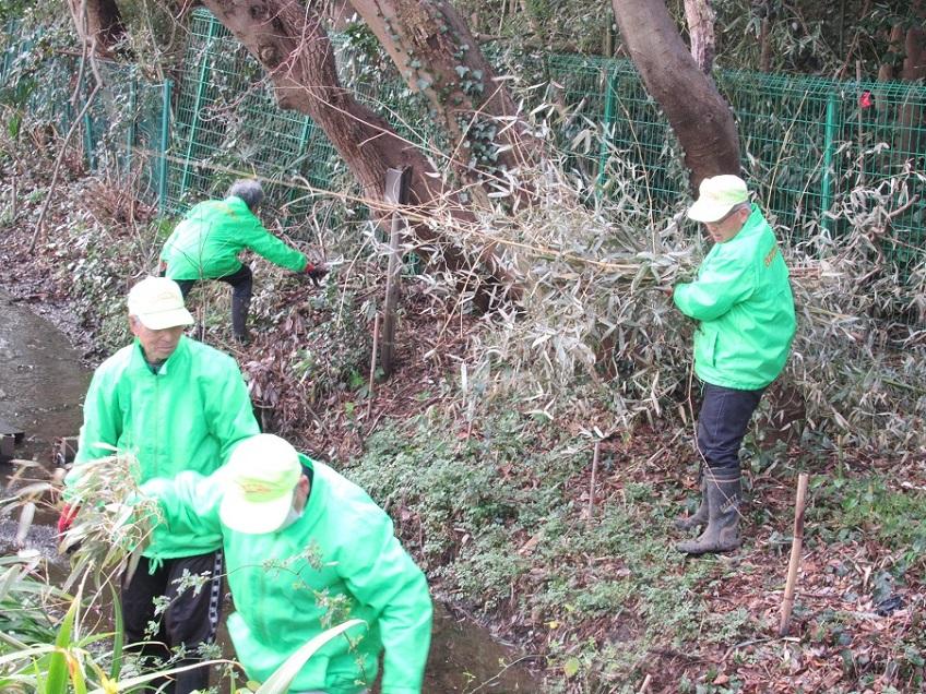作業中 枯れた竹の運搬
