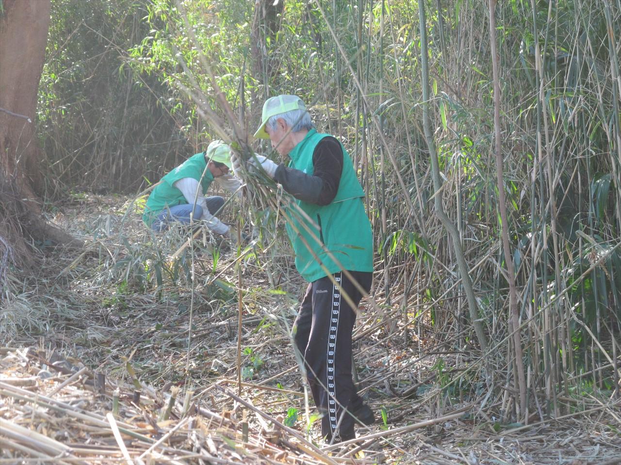 伐採後の笹竹の処理