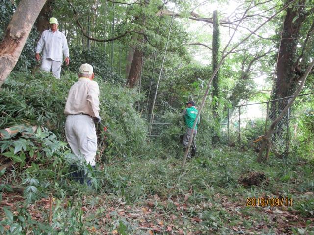 伐採した竹の集積