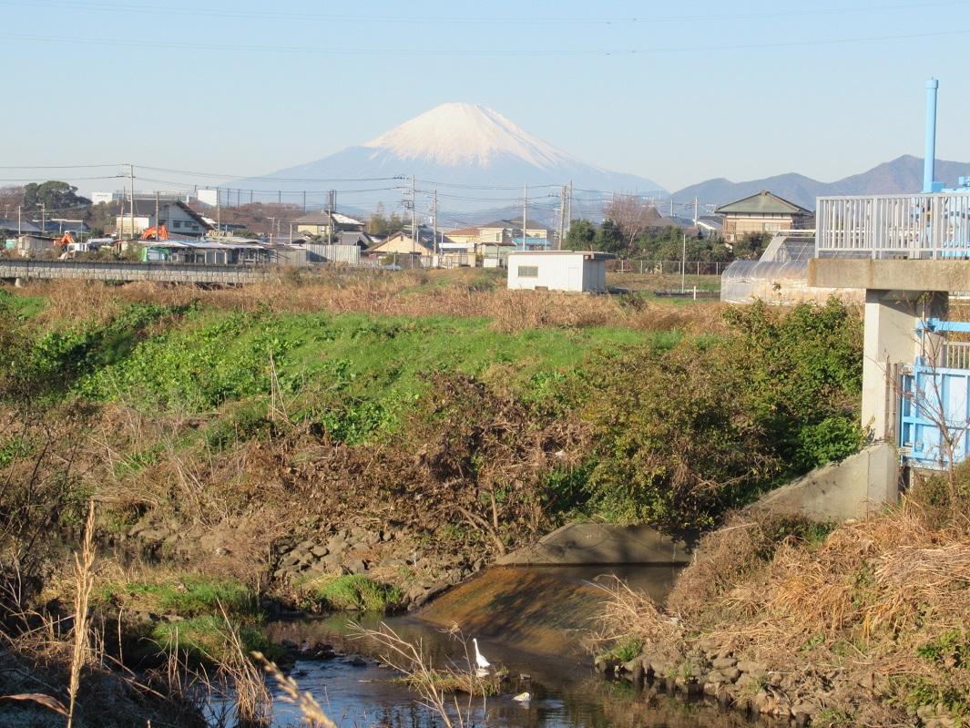 目久尻川_コサギと富士山