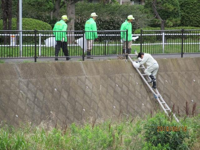 作業開始(はしごで川原に降ります)