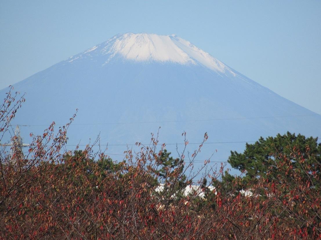 中央公園から見た富士山