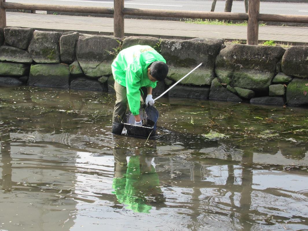 3月27日_小魚の捕獲