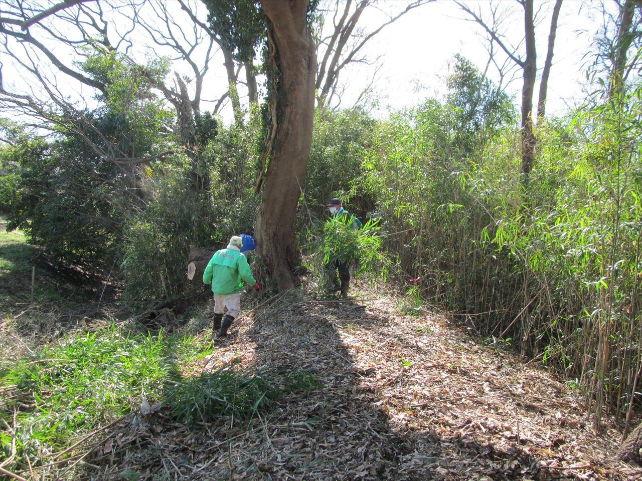 笹竹の伐採、運搬