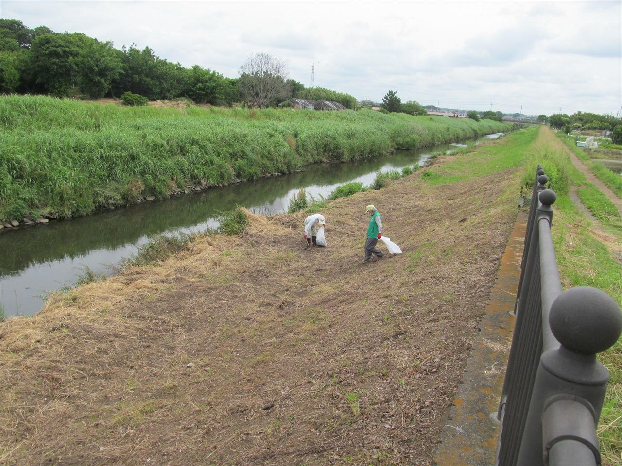作業中_草刈りが終わった河川敷のゴミ拾い