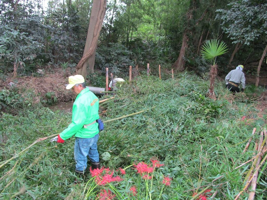 伐採した竹の整理