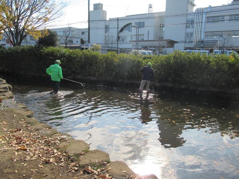 ジャブジャブ池清掃