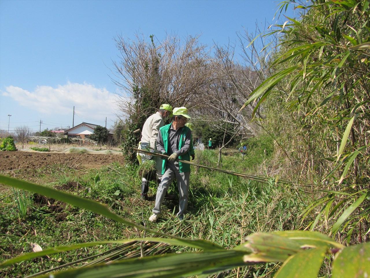 笹竹の伐採と運搬