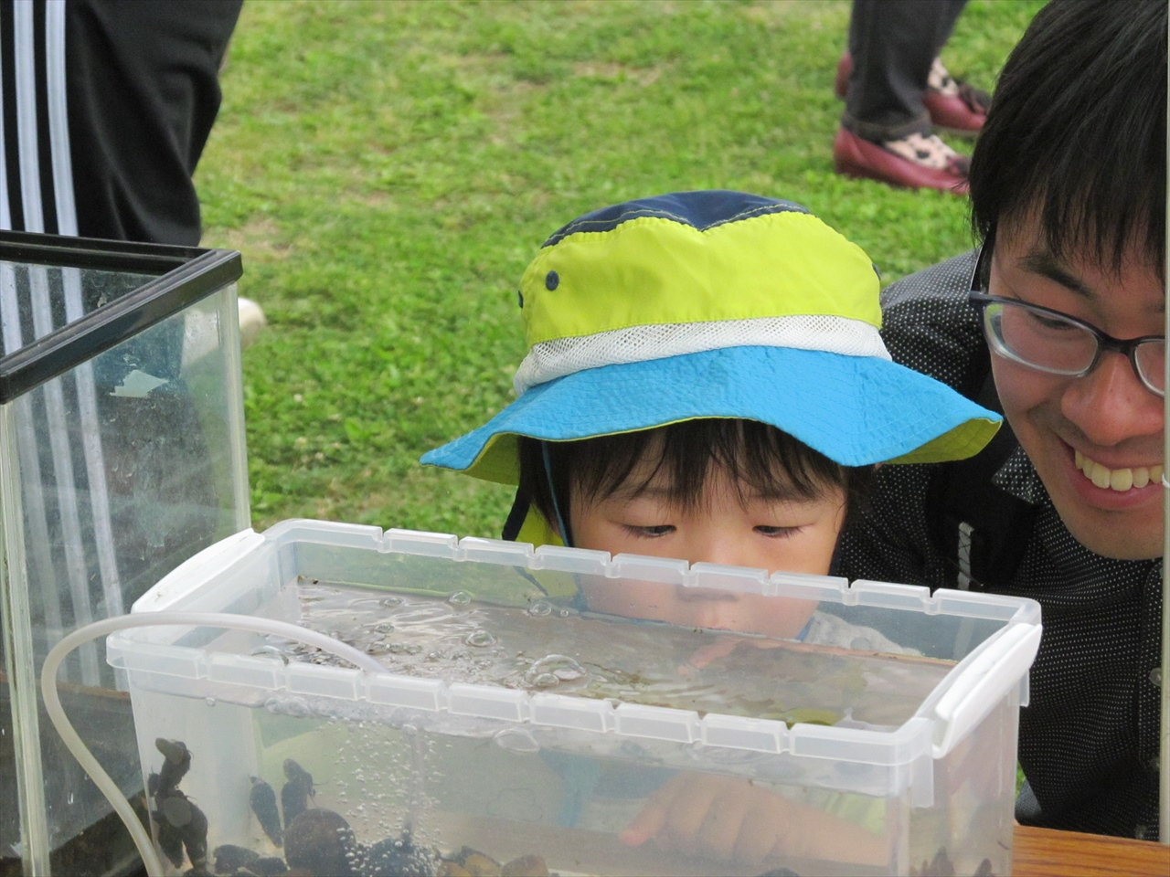 魚の観察_日本うなぎ