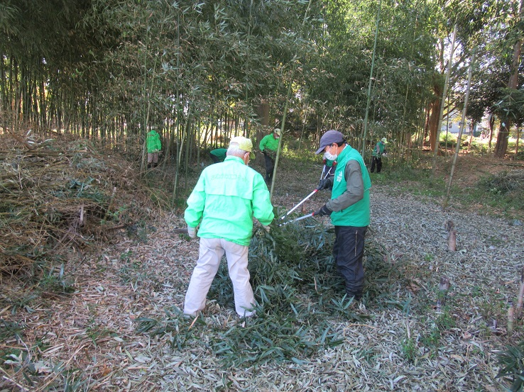 刈り取った枝の整理