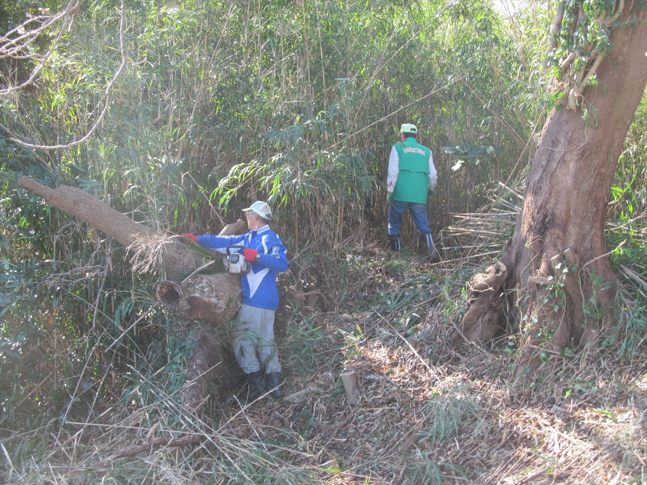 笹竹の伐採