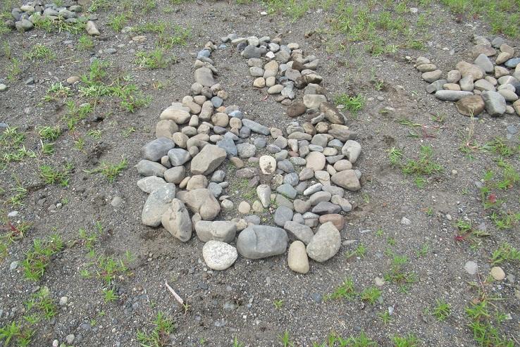 新芽を石で囲います。