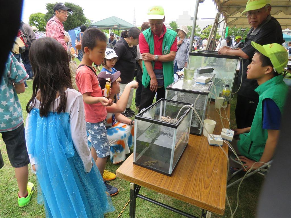 相模川、目久尻川の魚展示