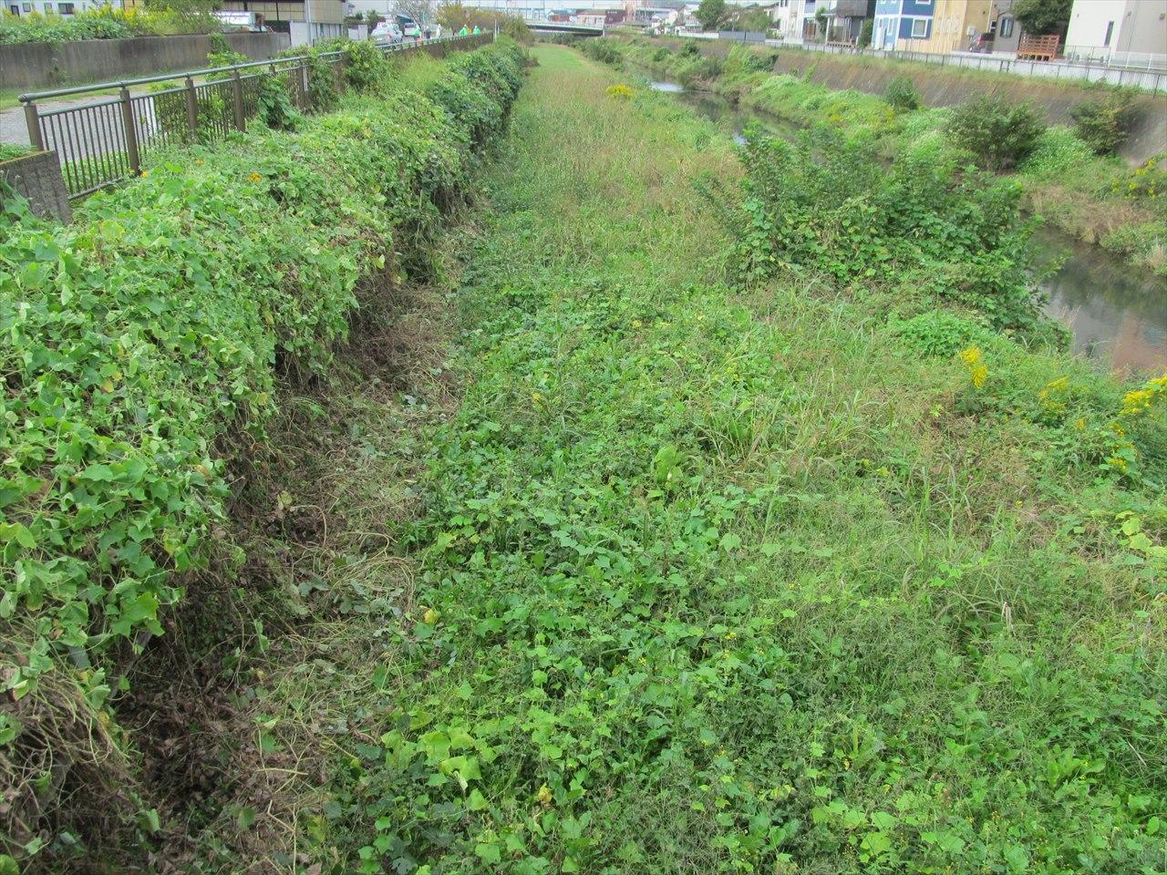 作業開始前_茶ヶ谷橋から下流左岸