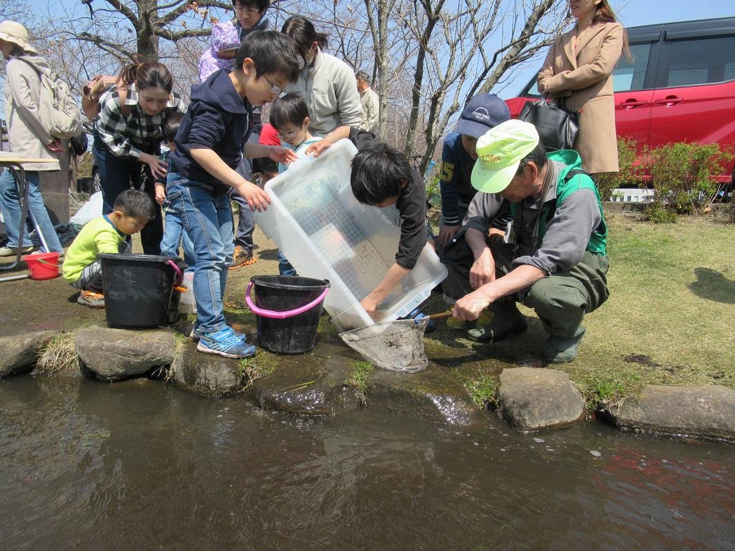 小魚を池に戻します