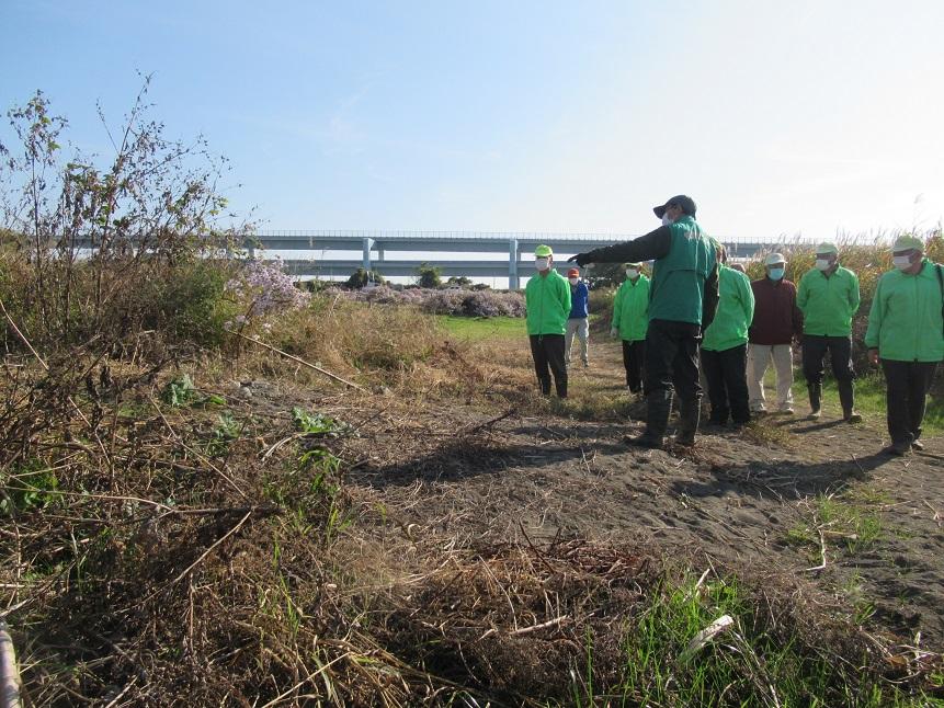 旧圃場_昨年の台風で流されましたが、カワラノギクが残っていました