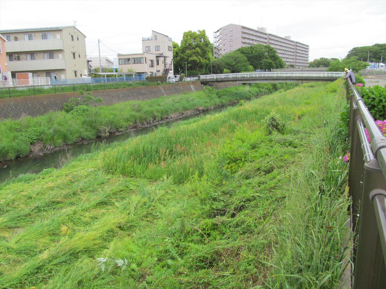 草刈り実施前(2区間)