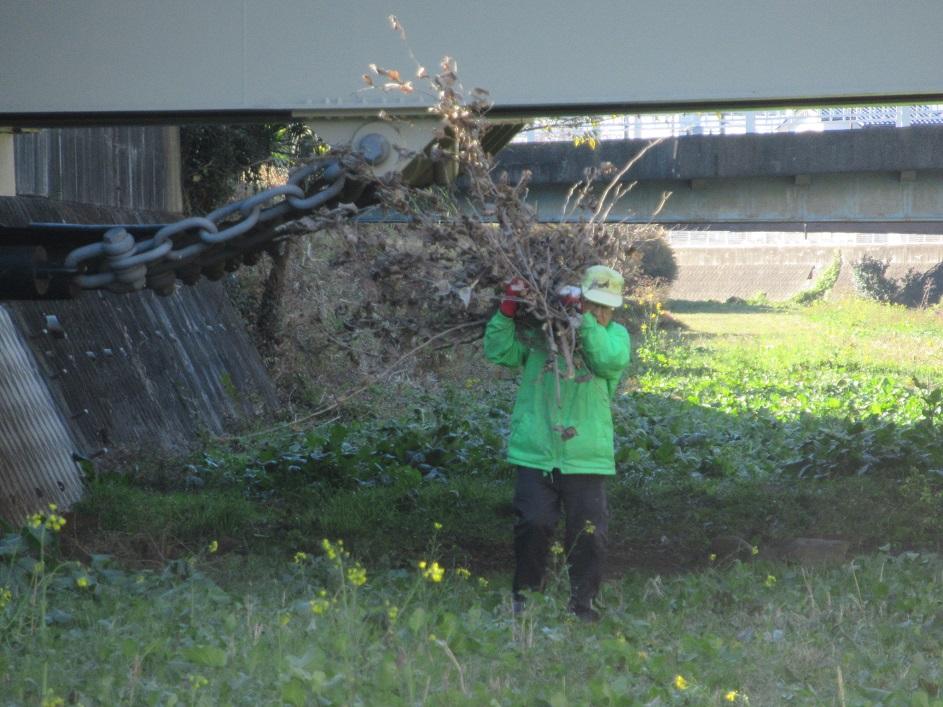 以前伐採した枝の運搬