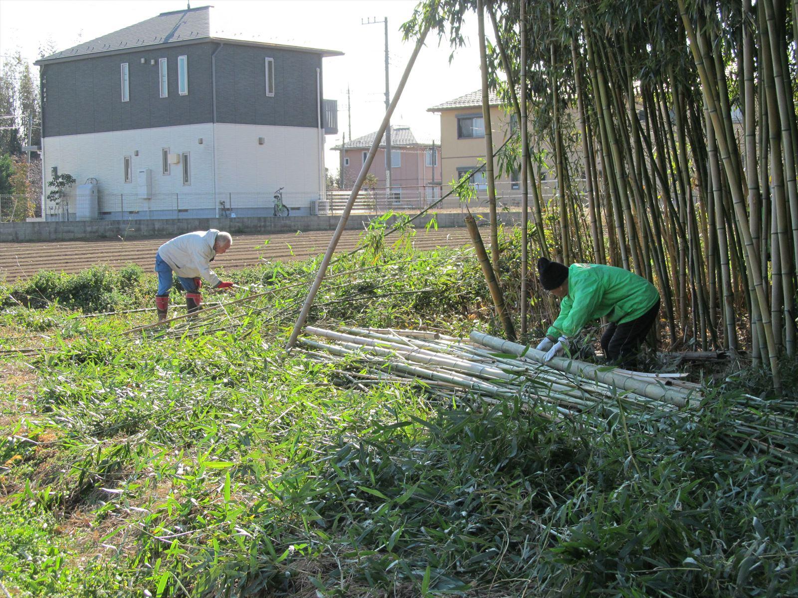 伐採後の竹の整理