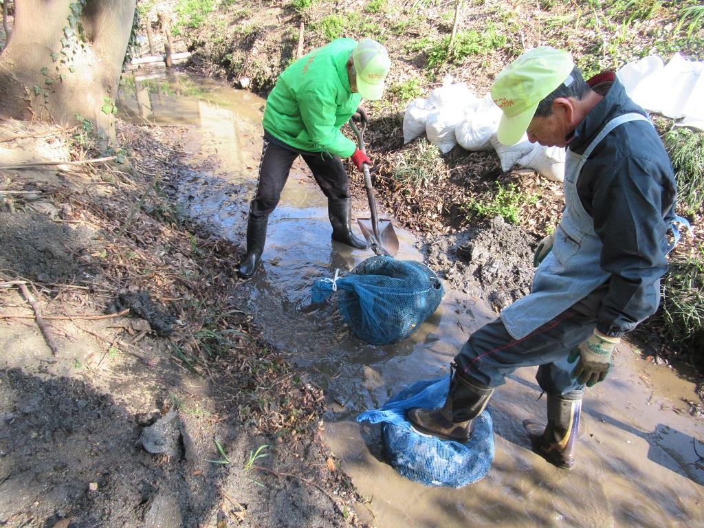 竹炭を川底に埋めます