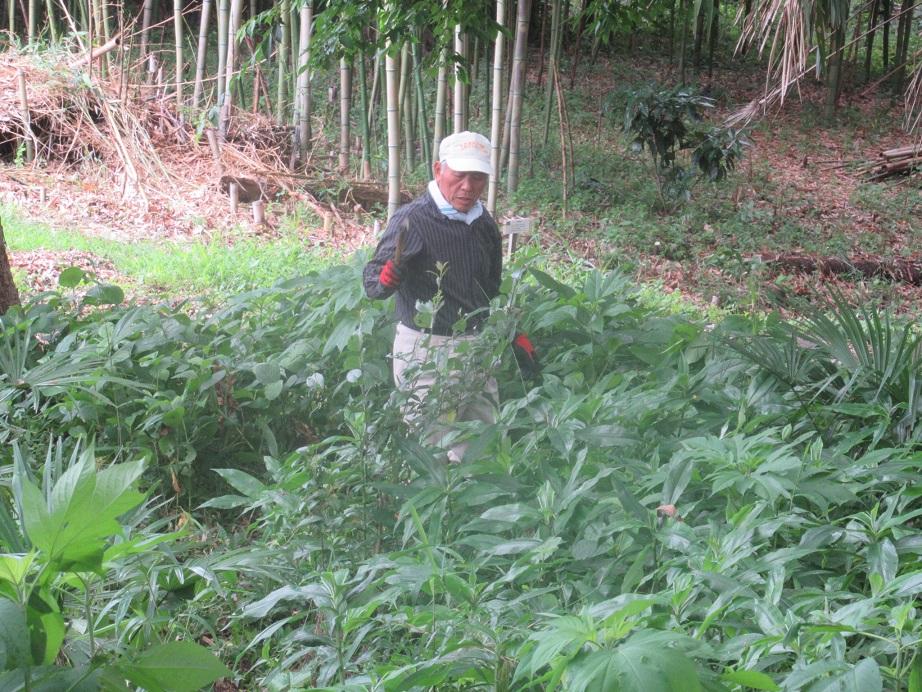 自然観察の森整備