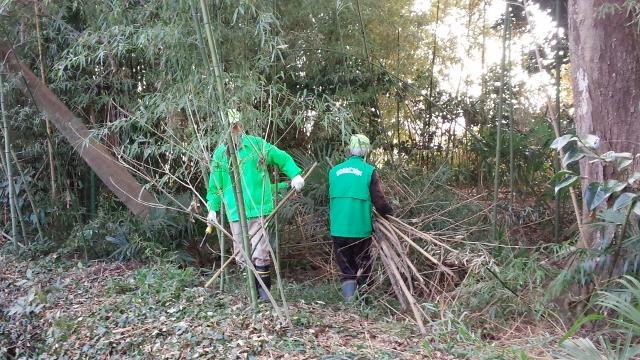 竹の伐採1