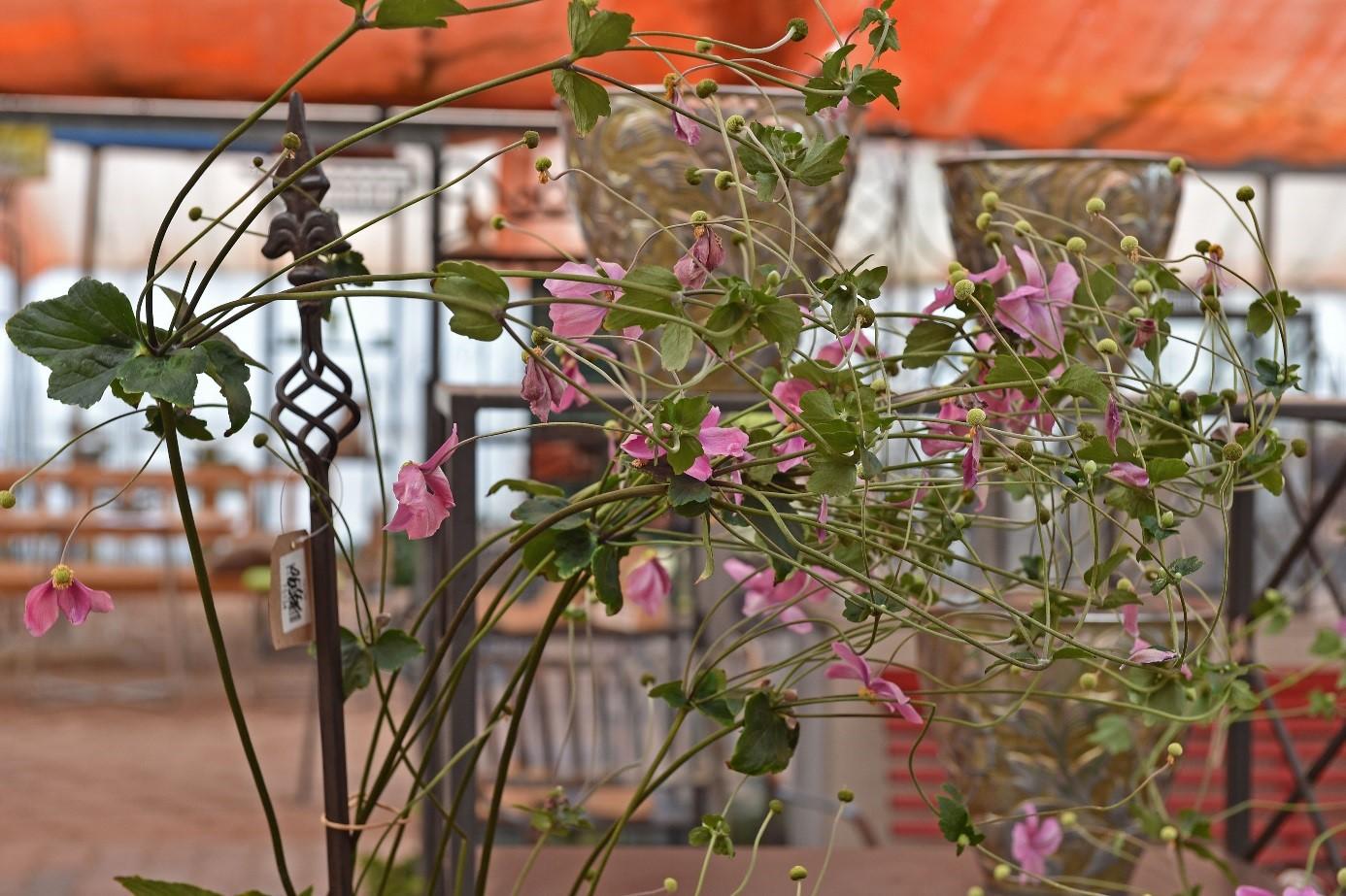 Herbst 2019 in den Historischen Rosengärten Hemmingen