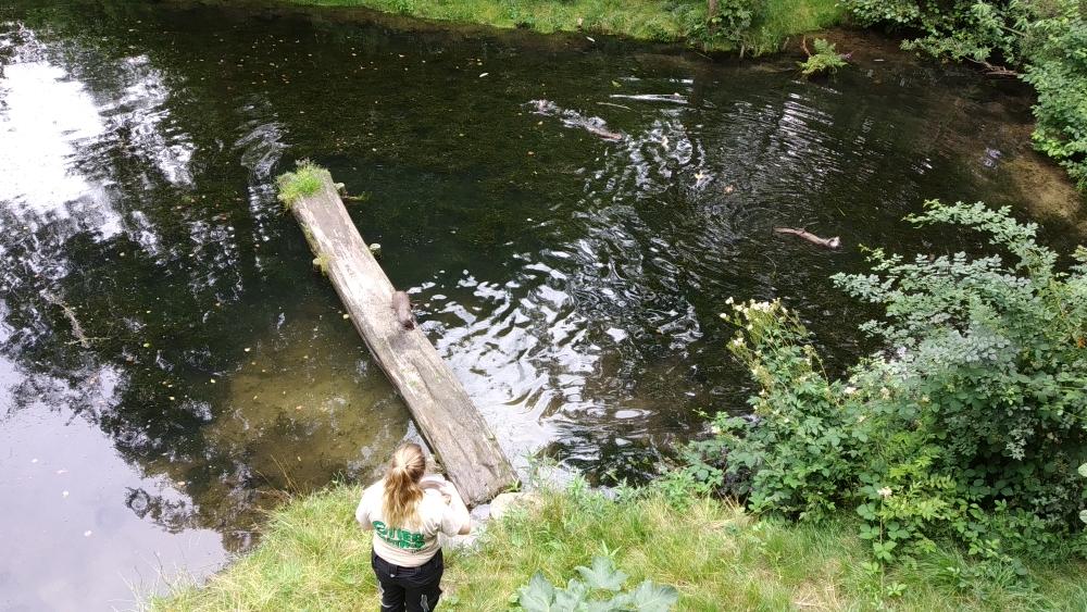 Fütterung der Fischotter