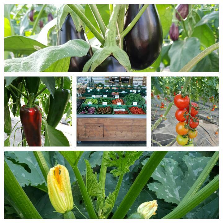 Aus eigenem Anbau: Tomaten, Gurken, Aubergine und vieles mehr!