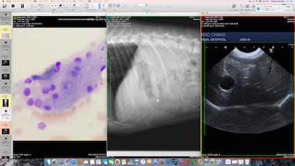 肝臓の細胞診、レントゲン像、エコー像を同時に閲覧し、病状を判断します。