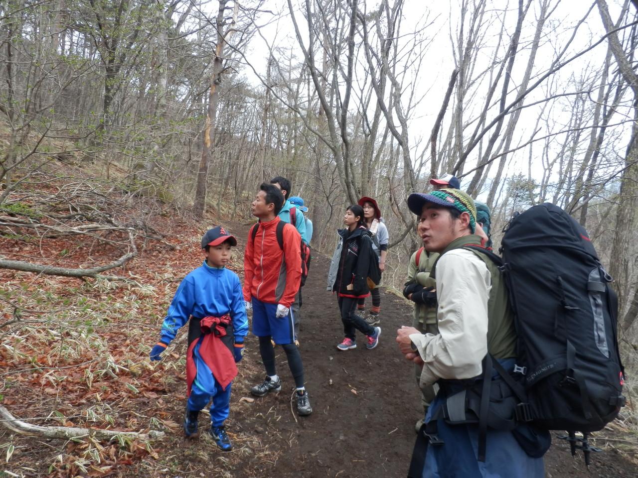 林帯登山道でカラマツの芽吹きについての説明②